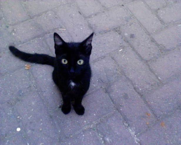 cat-1387052-640x512